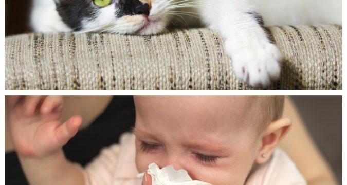 Как проявляется аллергия на кошек
