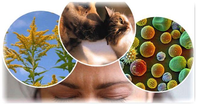 Что такое аллергия простыми словами